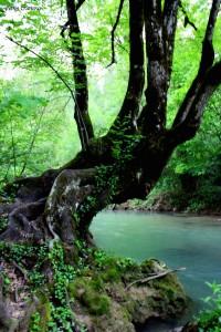 Ecoexperience: la magia de descubir la naturaleza